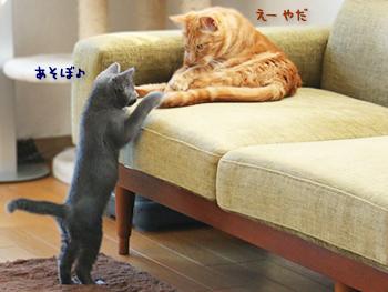 ミーシャくん・モコちゃん