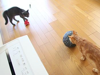 モコちゃん・ミーシャくん