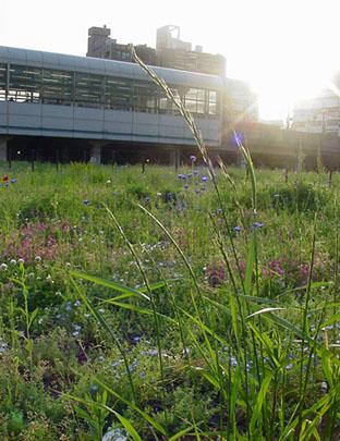 駅前のお花畑。